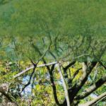 泉の森-Foresta
